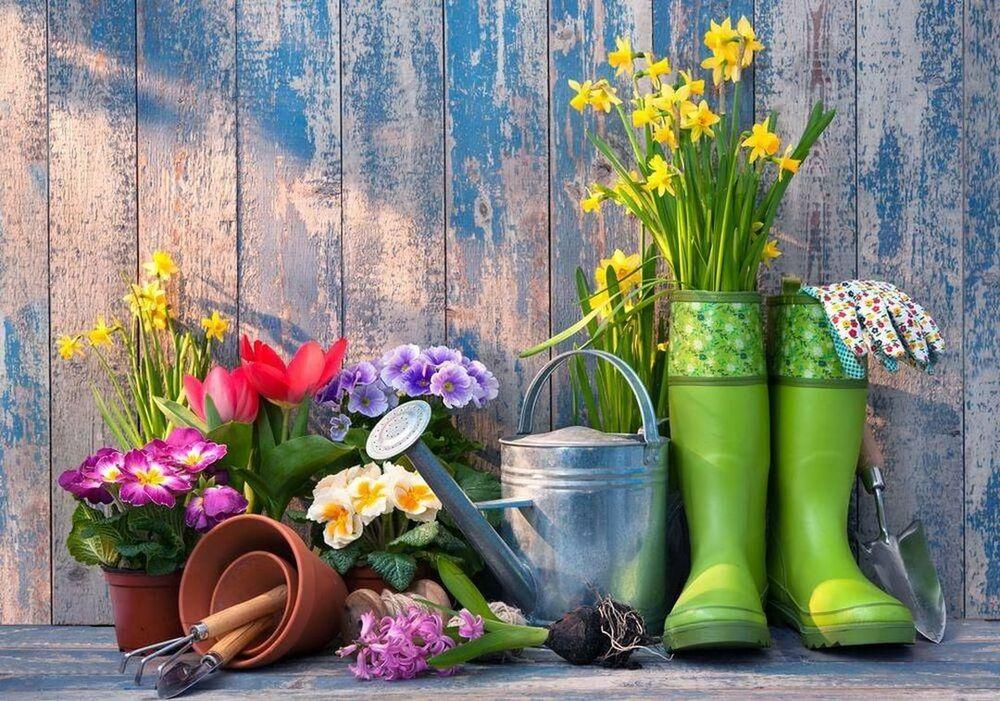 Outillage de jardin : comment faire les bons choix pour sa pelouse ?