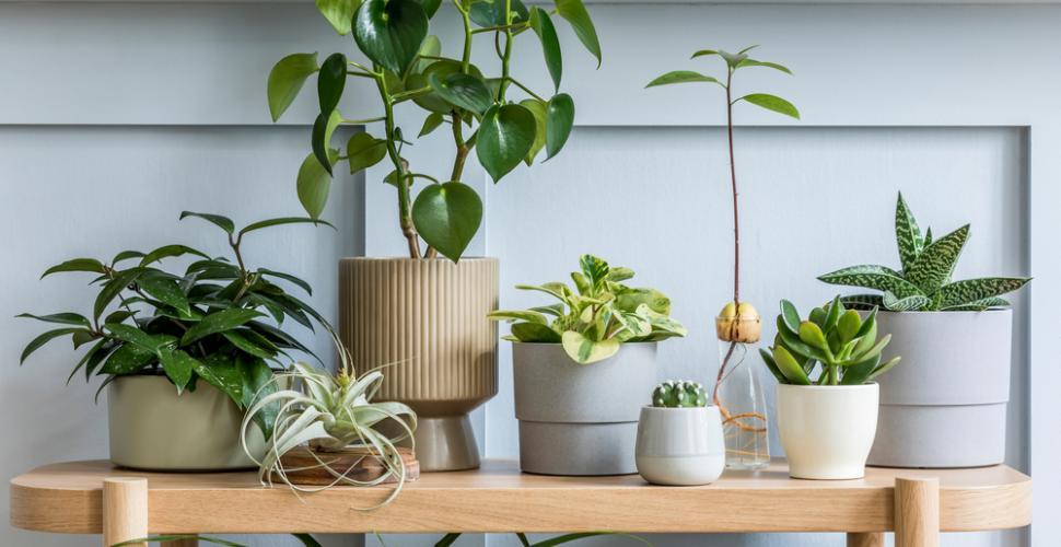 Décorer avec des plantes, les règles de base